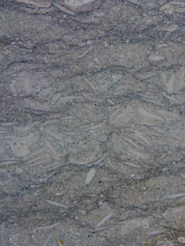 Fossil_gebürstet - Material - Natursteine Schreiner - Allensbach